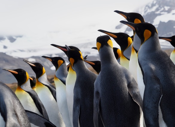 Hungry Penguins Cool Pack for Lunch Boxes